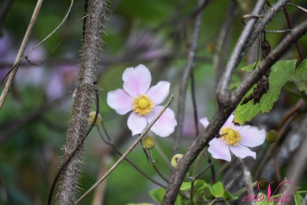 a-secret-garden-6