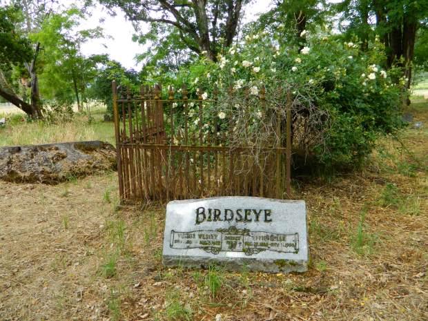 birdseye3